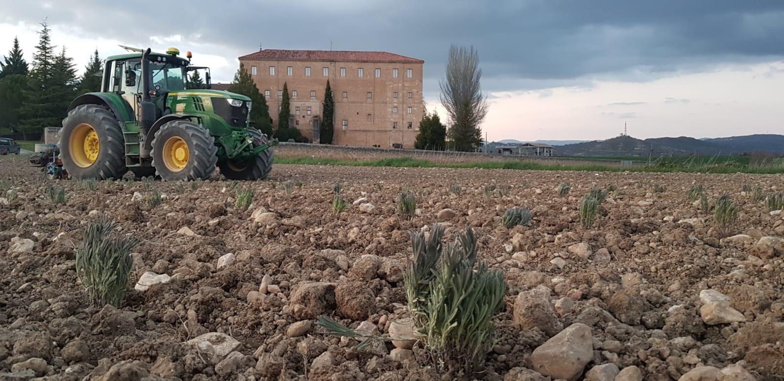 Llegadas desde Guadalajara, las plantas ya brotan en Santa Gadea del Cid, entre otras localidades